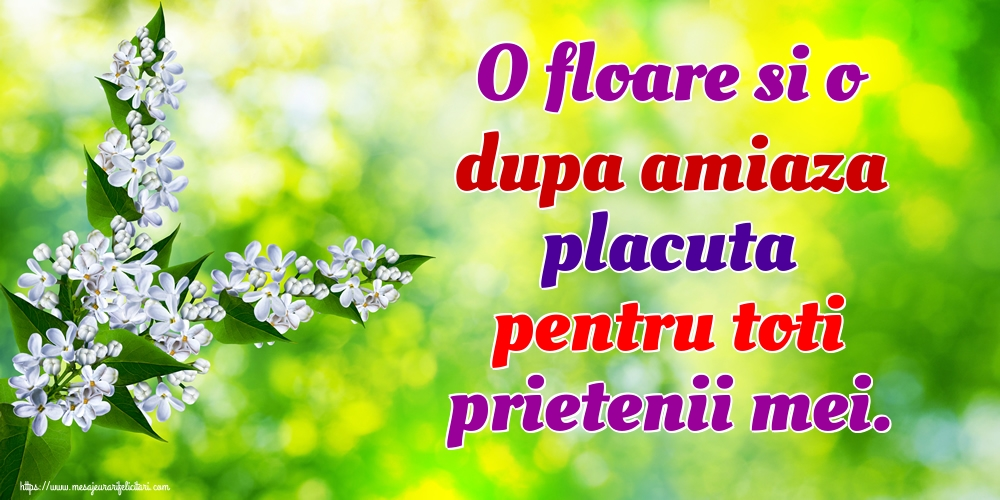 Felicitari de Amiaza - O floare si o dupa amiaza placuta pentru toti prietenii mei. - mesajeurarifelicitari.com