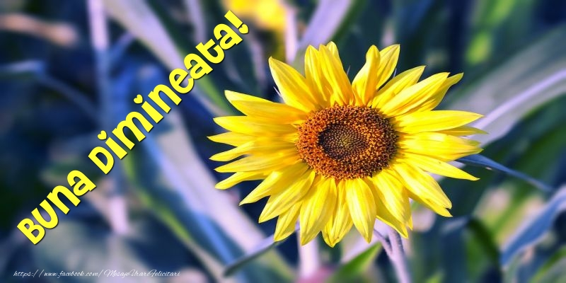 Felicitari de buna dimineata - Buna Dimineata! - mesajeurarifelicitari.com
