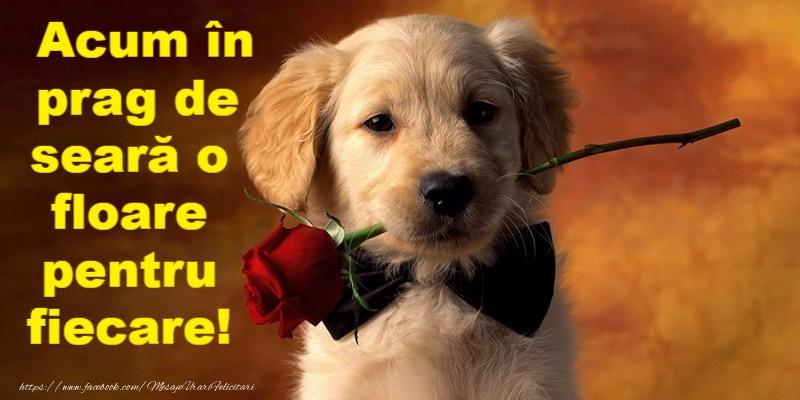 Felicitari de buna seara - Buna seara prieteni! - mesajeurarifelicitari.com