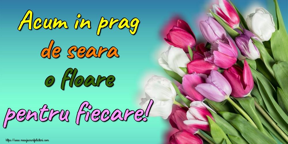 Cele mai apreciate felicitari de buna seara - Acum in prag de seara o floare pentru fiecare!