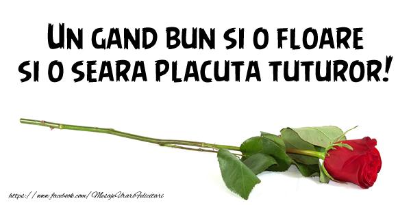 Buna seara Un gand bun si o floare si o seara placuta tuturor!