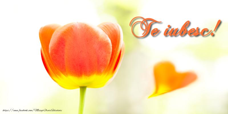 Felicitari de dragoste cu flori - Te iubesc!