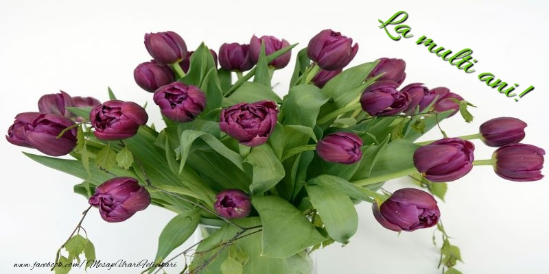 Felicitari cu flori cu lalele - La multi ani!