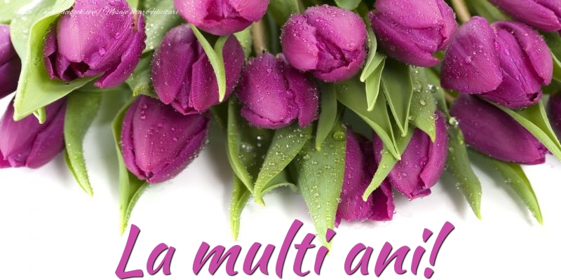 Cele mai apreciate felicitari cu flori cu lalele - La multi ani!