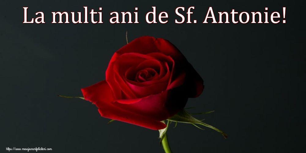 Felicitari de Sfantul Antonie cel Mare - La multi ani de Sf. Antonie!