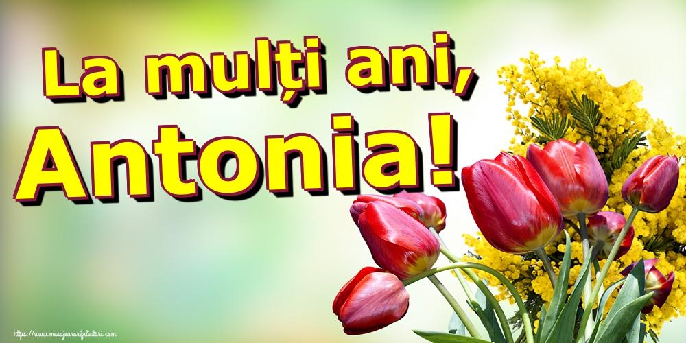 Cele mai apreciate felicitari de Sfantul Antonie cel Mare - La mulți ani, Antonia!