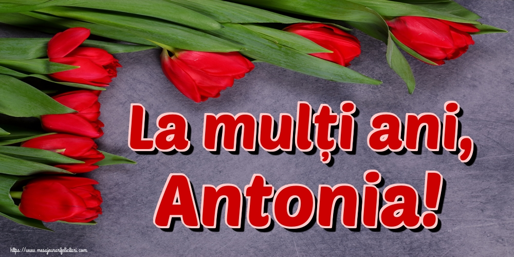 Sfantul Antonie cel Mare La mulți ani, Antonia!