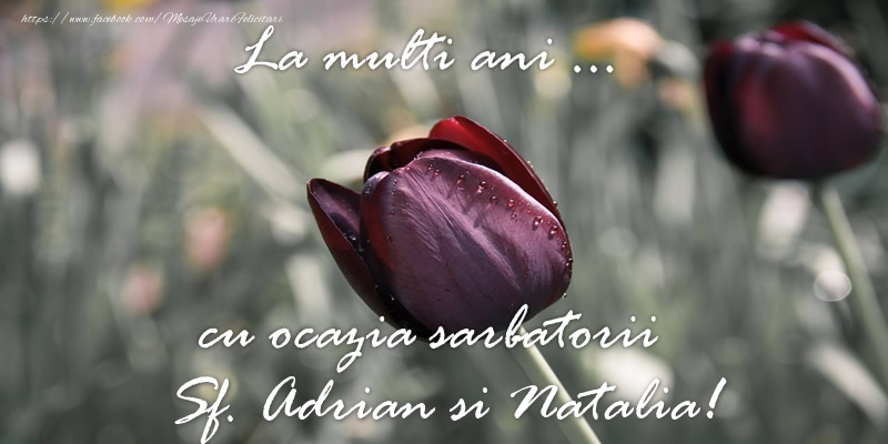 Felicitari de Sfintii Adrian si Natalia - La multi ani ... cu ocazia sarbatorii Sf. Adrian si Natalia!