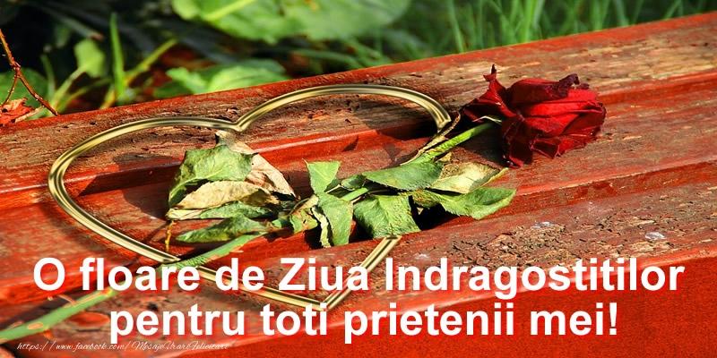 O floare de Ziua Indragostitilor pentru toti prietenii mei!