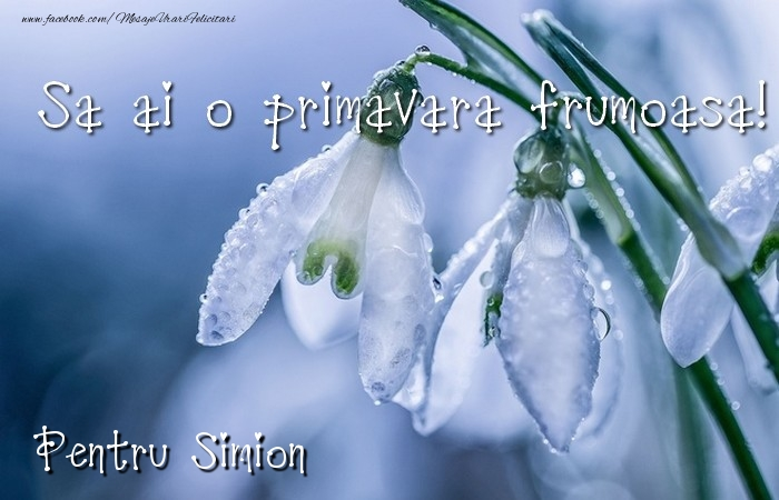 Felicitari de 1 Martie - Va doresc o primavara minunata Simion