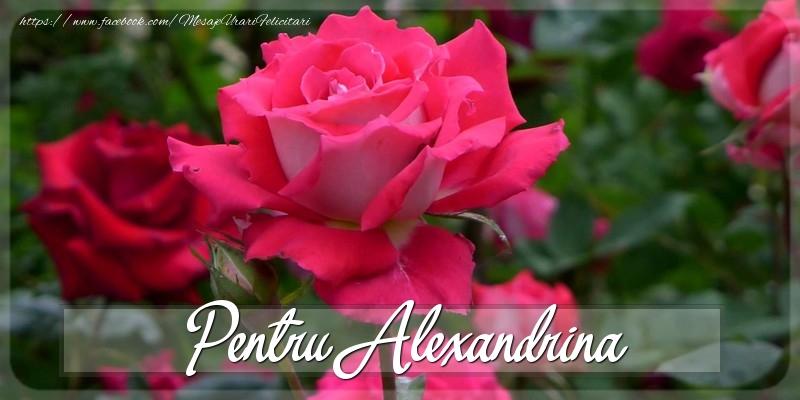 Felicitari Diverse - Pentru Alexandrina