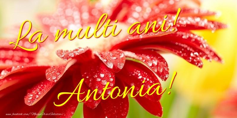 Felicitari de la multi ani - La multi ani! Antonia