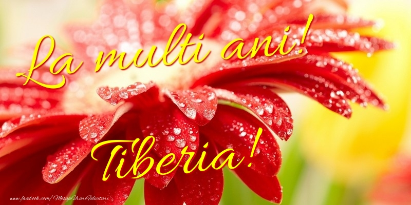 Felicitari de la multi ani - La multi ani! Tiberia