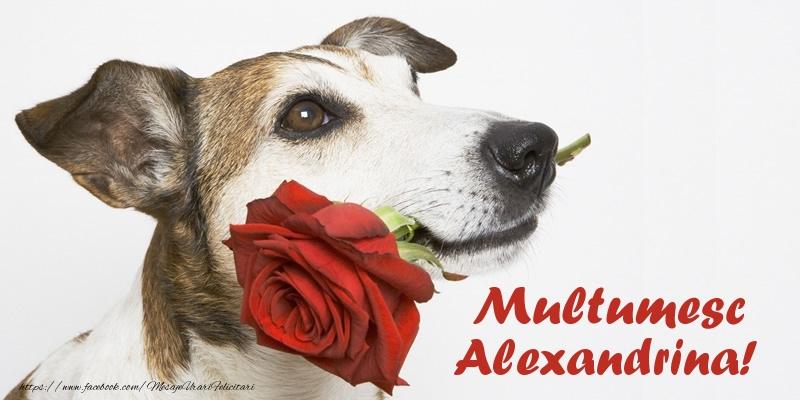 Felicitari de multumire - Multumesc Alexandrina!