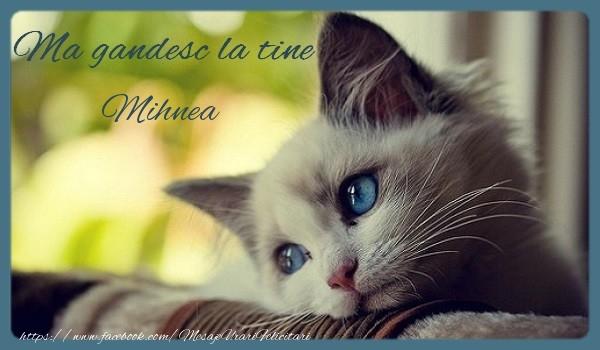 Felicitari de prietenie - Ma gandesc la tine Mihnea