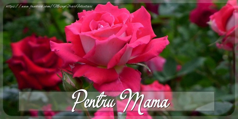 Felicitari Diverse pentru Mama - Pentru mama