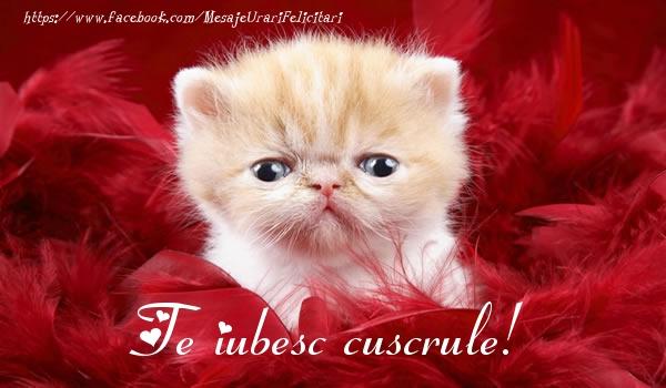 Felicitari de dragoste pentru Cuscru - Te iubesc cuscrule!