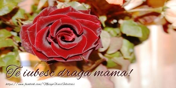 Felicitari de dragoste pentru Mama - Te iubesc draga mama!