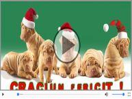 Craciun Fericit! Merry Christmas!