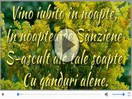 Noapte de Sanziene...